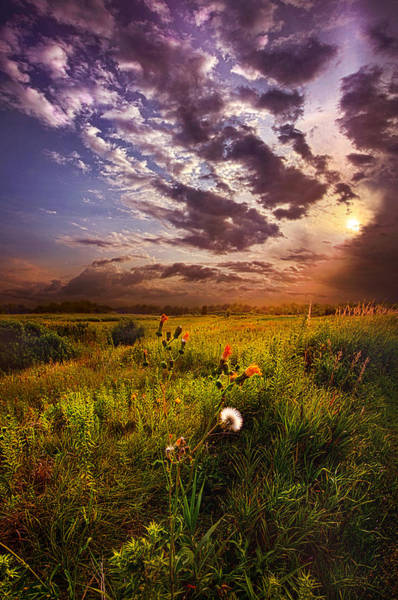Photograph - Into Paradise May The Angels Lead You by Phil Koch