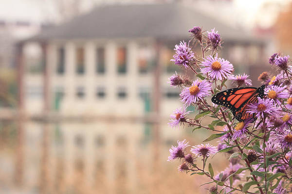 Into The Asters Art Print