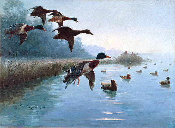 Wall Art - Painting - Into The Decoys by Frank Stick