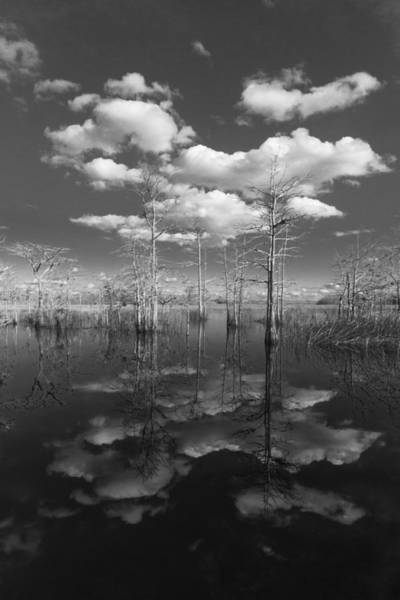Everglades Wall Art - Photograph - Into The Everglades by Debra and Dave Vanderlaan