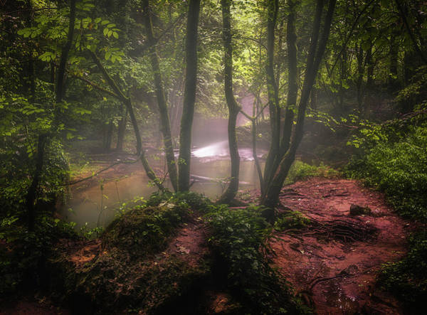 Wall Art - Photograph - Into The Forest 4 by Adrian Malanca