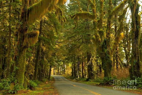 Photograph - Into The Hoh Rainforest by Adam Jewell