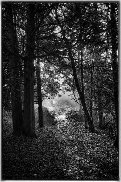 Photograph - Into The Light by David Heilman