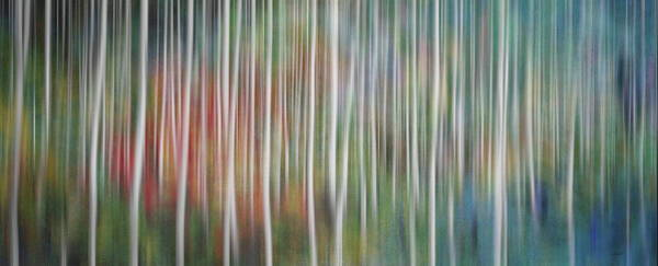 Photograph - Into The Magical Forest  by Andrea Kollo