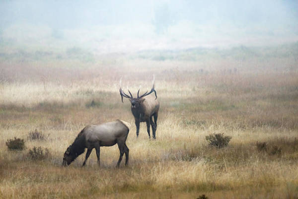 Photograph - Into The Mist by Bitter Buffalo Photography