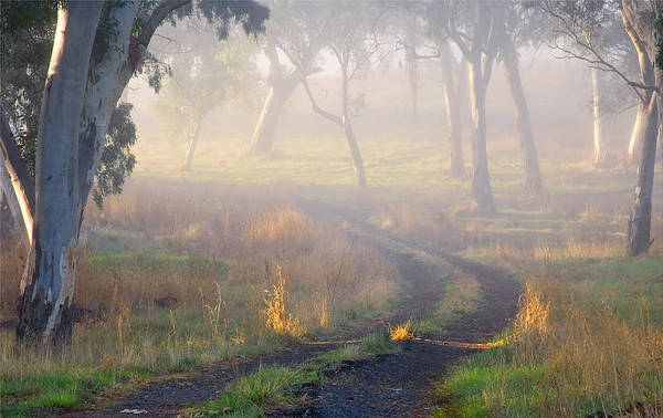 Path Photograph - Into The Mist by Mike  Dawson