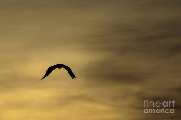 Photograph - Into The Sun #1 by Richard Smith