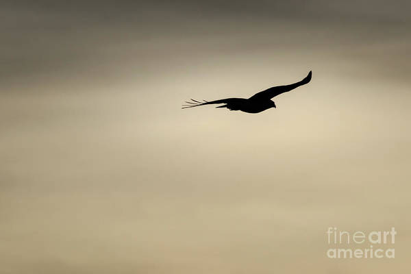 Photograph - Into The Sun #3 by Richard Smith
