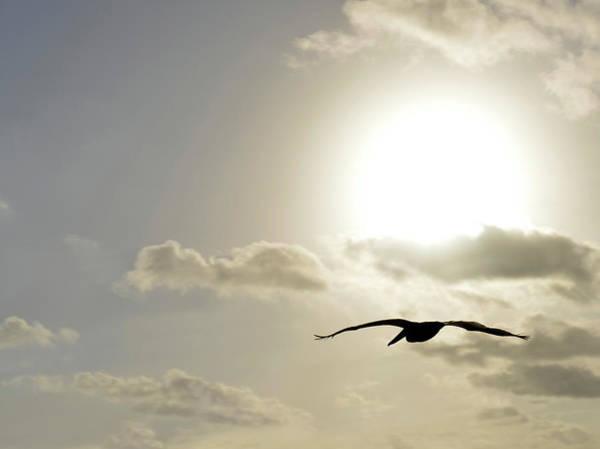 Photograph - Into The Sun by Sebastien Coursol