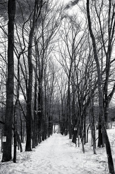 Photograph - Into The Winter Forest by John Rizzuto