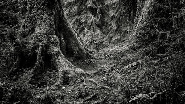 Olympic Peninsula Photograph - Into The Woods - Black And White by Stephen Stookey