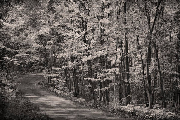 Photograph - Into The Woods Bw by Theo O'Connor