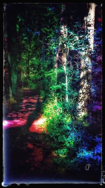 Photograph - Into The Woods by Christine Paris