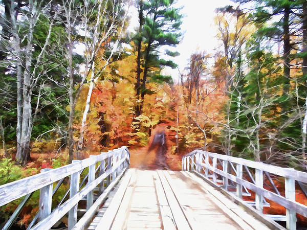 Algonquin Park Digital Art - Into The Woods by Leslie Montgomery