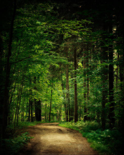 Into The Woods Wall Art - Photograph - Into The Woods by Lisa Russo