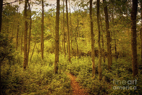 Wall Art - Photograph - Into The Woods by Mary Machare