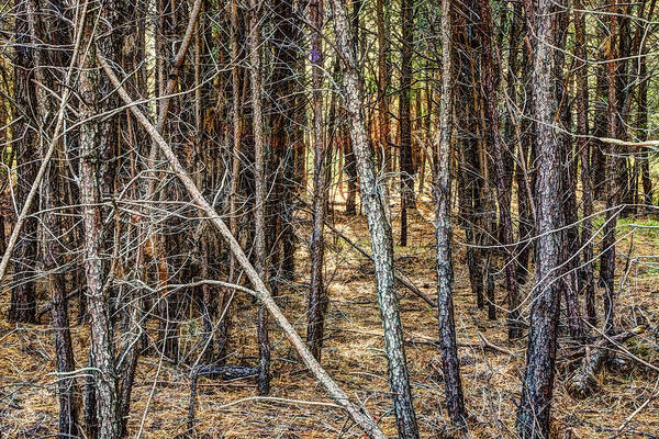 Photograph - Into The Woods by Pete Federico