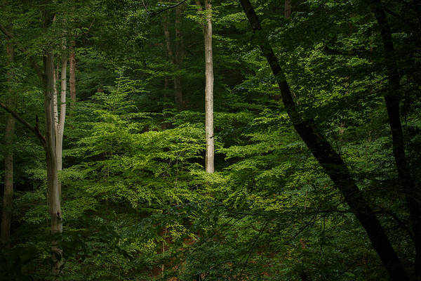 Wall Art - Photograph - Into The Woods by Shane Holsclaw