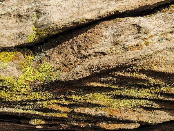 Photograph - Intricate Patterns - Mosses And Lichens by NaturesPix