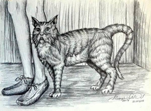 Drawing - Intrigue  The Cat by Georgia's Art Brush