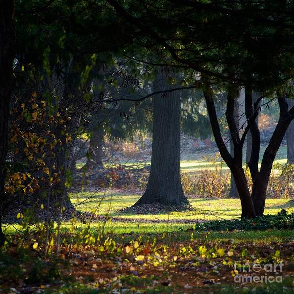 Photograph - Intrigued By The Light by Frank J Casella