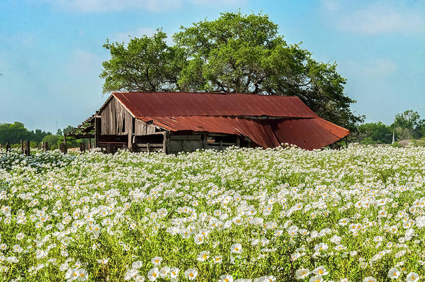 Photograph - Poppy Invasion In Hillcountry-texas by Usha Peddamatham