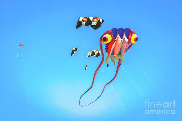 Wall Art - Photograph - Invasion Of The Kites  by Colleen Kammerer