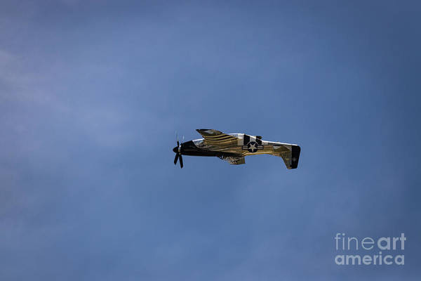 Photograph - Inverted Mustang by Andrea Silies