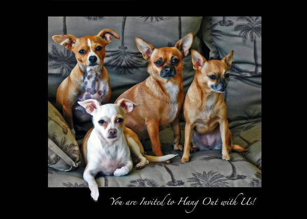 Photograph - Invitation To Hang Out by Ginger Wakem