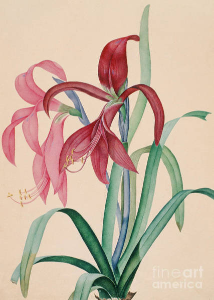 Crimson Painting - Iris, 1812 by French School