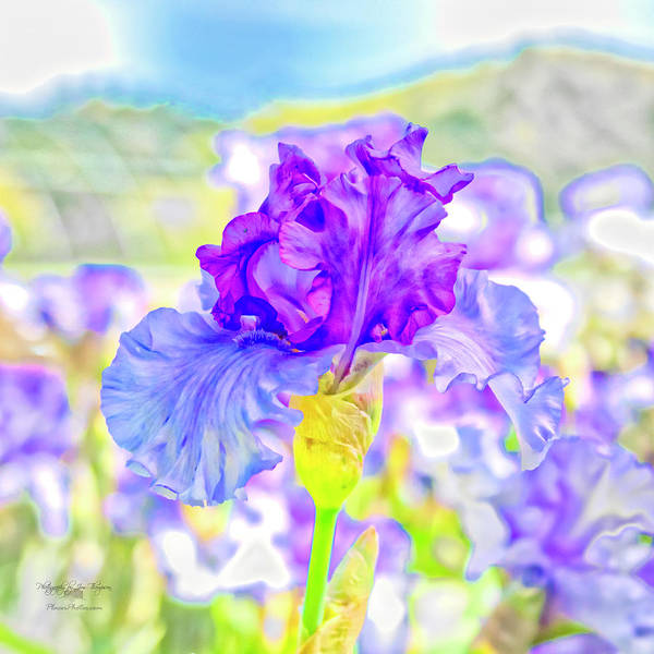 Photograph - Iris 2 by Jim Thompson