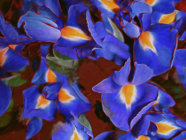 Gestural Digital Art - Iris Abandon 15 by Lynda Lehmann