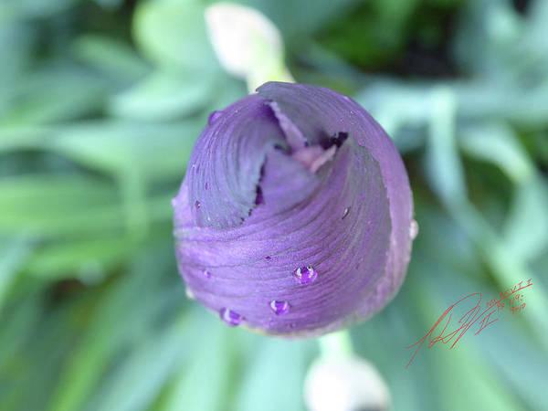 Photograph - Iris After The Rain Vi by Leon De Vose