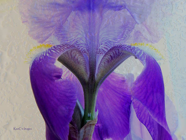 Ice Plant Digital Art - Iris And Ice by Kae Cheatham