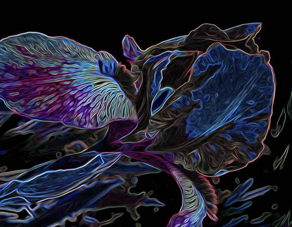 Photograph - Iris Deep Blue Glow by Lynda Lehmann