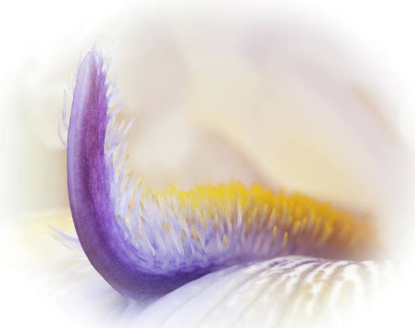 Photograph - Iris Detail by David Waldrop