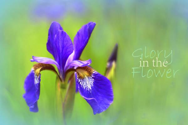 Photograph - Iris Elegance by Jessica Jenney