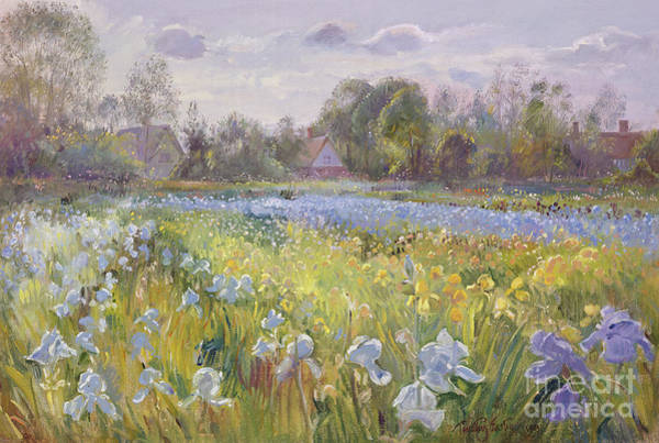 Field Of Flowers Wall Art - Painting - Iris Field In The Evening Light by Timothy Easton