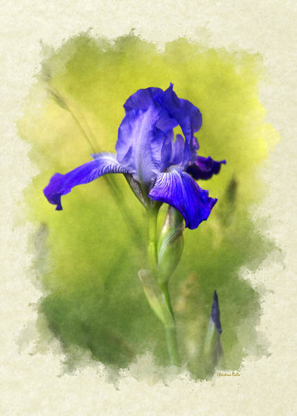 Photograph - Iris Flower Blank Note Card by Christina Rollo