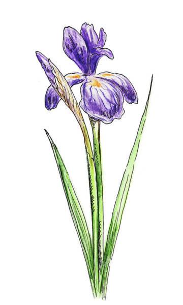 Painting - Iris Flower Watercolor by Irina Sztukowski