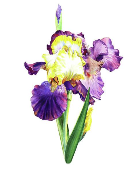 Painting - Iris Flowers Watercolor  by Irina Sztukowski