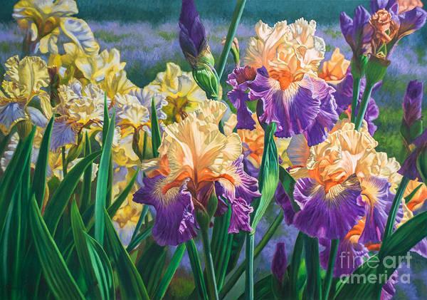 Irises Painting - Iris Garden 1 by Fiona Craig