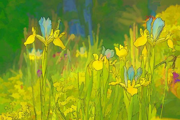 Photograph - Iris Garden by Robert Potts