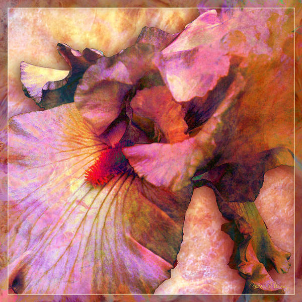 Digital Art - Iris IIi by Barbara Berney