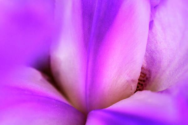 Wall Art - Photograph - Iris In Silk by Iris Richardson