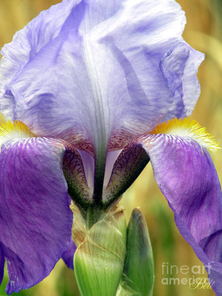 Wall Art - Photograph - Iris In Spring by Christine Belt