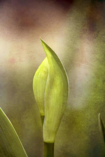 Photograph - Iris In Waiting Textured by Tom Singleton