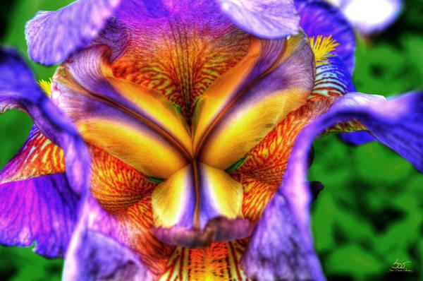 Photograph - Iris Inside by Sam Davis Johnson