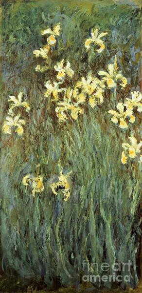 Painting - Iris Jaune by Celestial Images