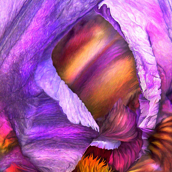 Purple Iris Mixed Media - Iris Moods 5 by Carol Cavalaris